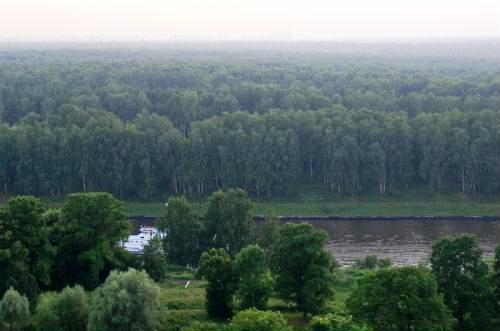 Khimkinskiy Forest