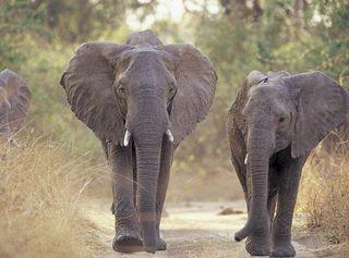 elephantsonroad