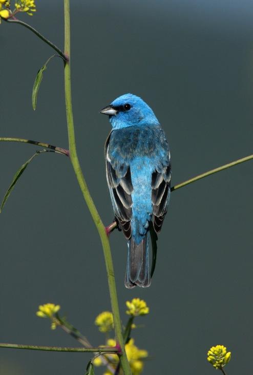 2012-jan-bluebird