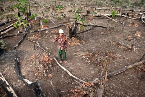 Woman in Deforested Area of Prey Lang