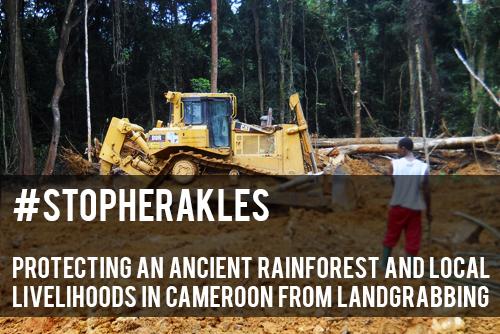 #StopHerakles: Stop Land Grabbing in Cameroon