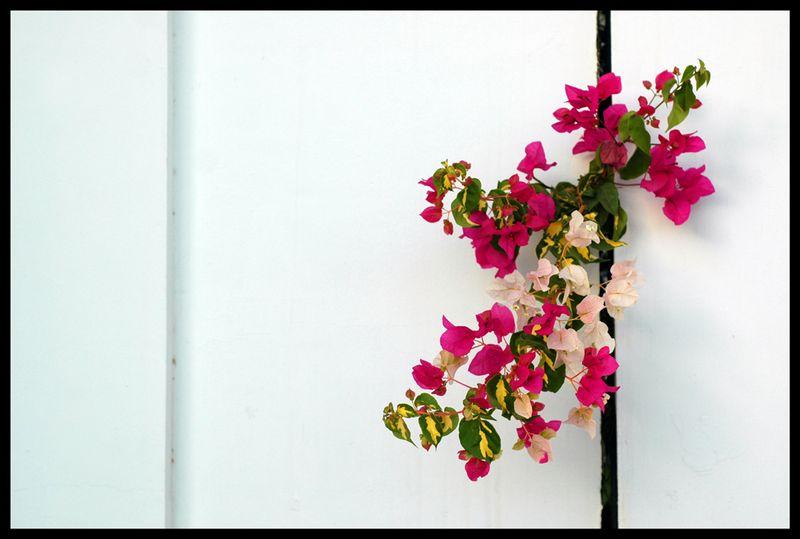 2013-feb-flowers