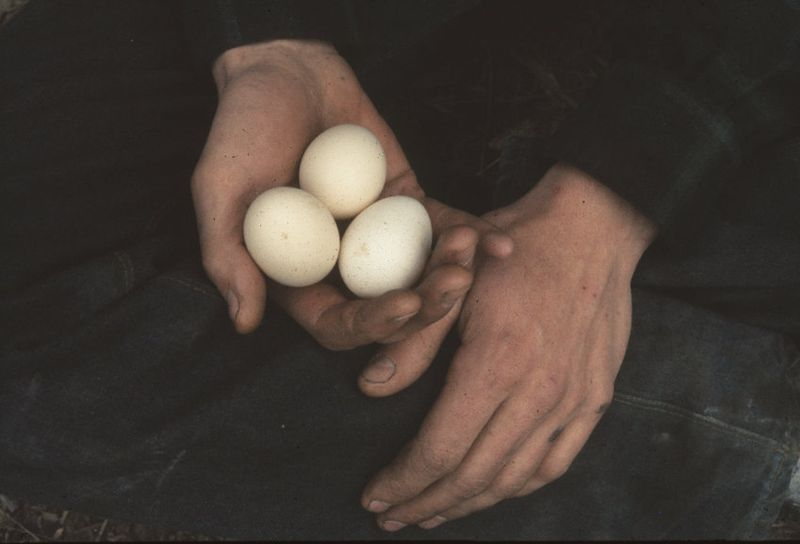 Robins hands w eggs