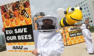 Avaaz 6