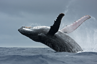 Whale Post